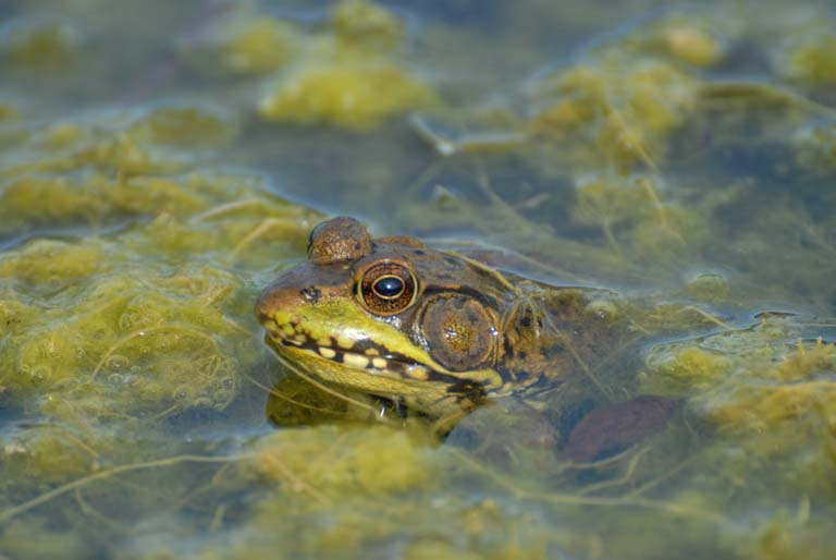 Farm Frogs and Toads Image