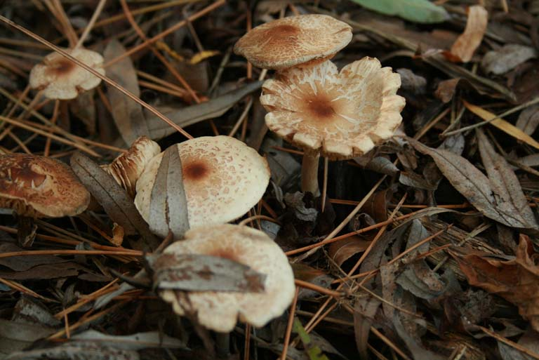 Mushrooms Found at The Farm Image