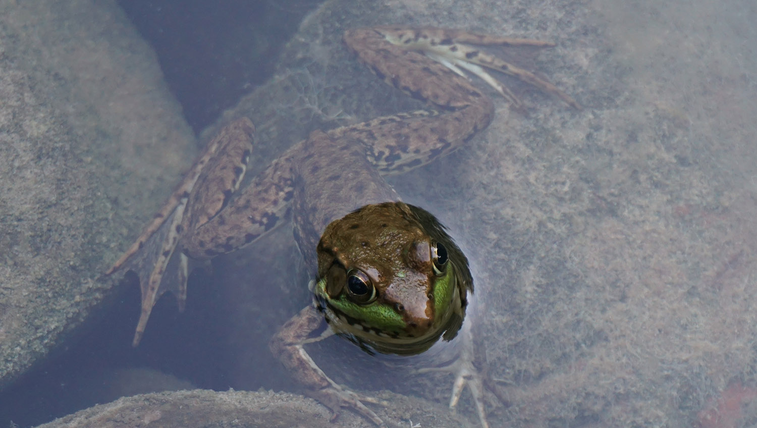Farm Frogs & Toads Slider Image