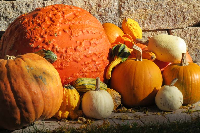 Pumpkins, Gourds, Melons and More Slider Image